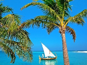 Palms, Boat, sea