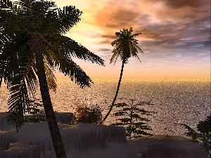 Palms, tropic, sun, Ocean, west