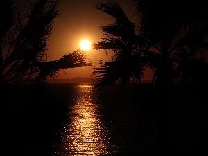 west, sea, Palms, sun