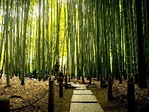 Park, exotic, bamboo