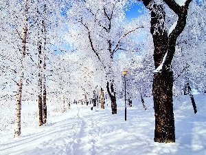 winter, birch, Path, snow