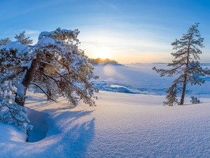 Sunrise, winter, viewes, pine, trees, snow
