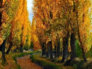 Poplars, autumn, Path