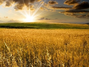 clouds, corn, rays of the Sun