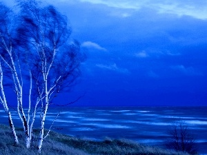 trees, birch, sea, viewes