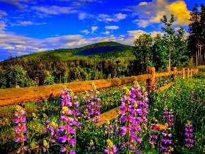 Fance, forest, Sky, Flowers