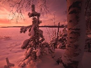snow, trees, pine, Great Sunsets, winter, viewes
