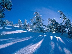 winter, Spruces, snow, forest