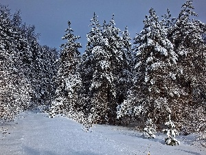 snow, winter, viewes, Spruces, trees
