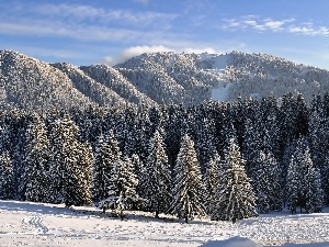 woods, snow, trees, Mountains, winter, Softwood, viewes