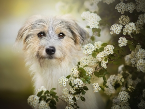 dog, Twigs, Spiraea, Flowers