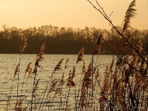 lake, west, sun, Cane