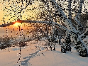 west, snow, birch-tree, traces, winter, sun, Houses