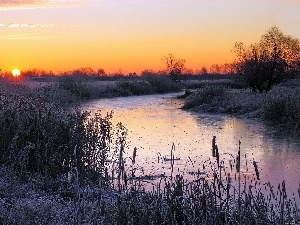 Bush, River, sun, winter, east, field