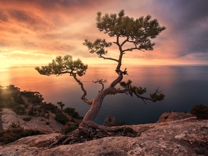trees, sea, Great Sunsets, clouds, pine, rocks