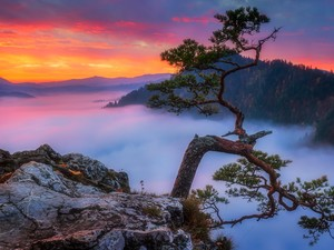 Pieniny Mountains, Poland, Sokolica Peak, Pieniny National Park, trees, pine, Fog, rocks, Great Sunsets
