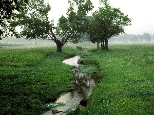 Narrow, Green, trees, viewes, brook, Meadow