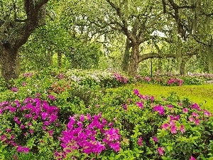 viewes, rhododendron, Garden, trees, Spring