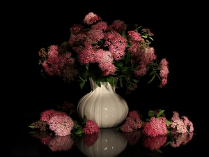 Flowers, Vase, Japanese Spirea, bouquet