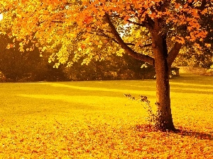 viewes, autumn, Leaf, trees, Park
