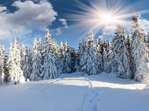 Covered, snow, trees, viewes, rays of the Sun