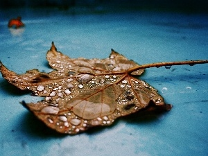 dry, drops, water, leaf