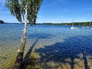 Waves, birch-tree, Kayaks, boats, Yachts, lake