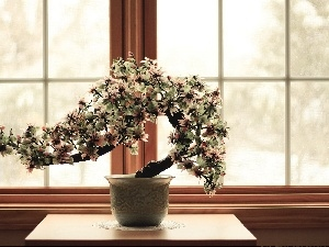 sapling, pot, Window, Bonsai