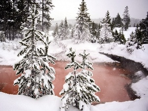 forest, lake, winter, Spruces