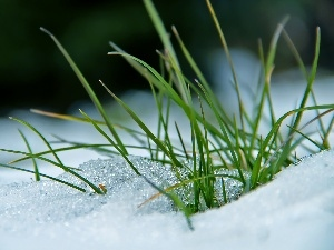 grass, snow, winter, blades